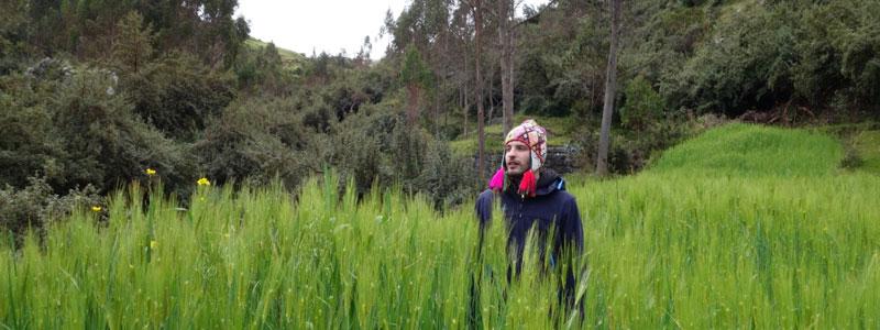san pedro or wachuma retreat