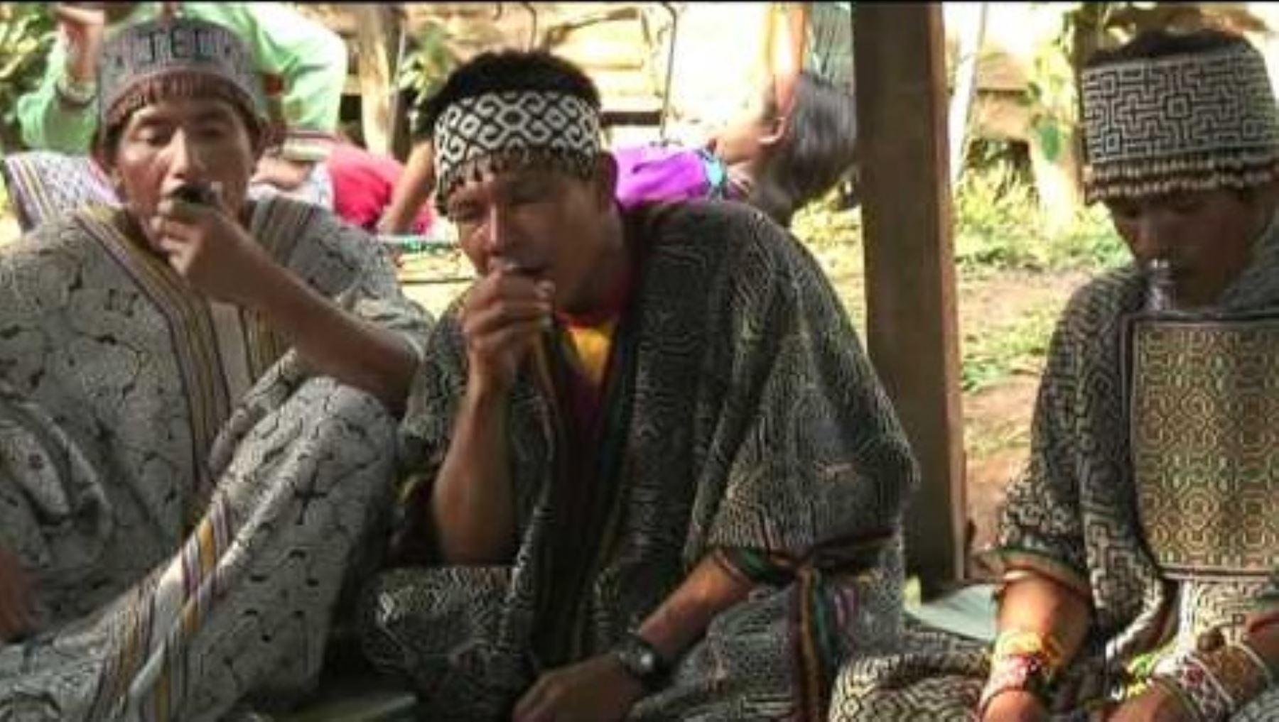 ayahausca healer shamans